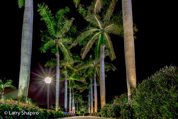 palm trees illuminated at night