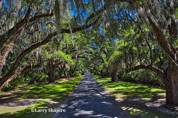 Avenue of Live Oaks - Litchfield Plantation near Pawleys Island, SC