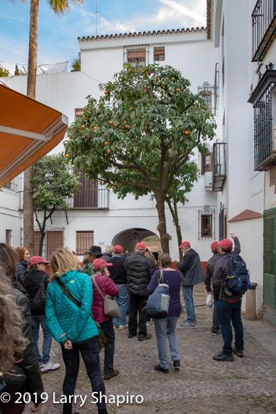 Am Shalom of Glencoe touring Seville Spain 2019