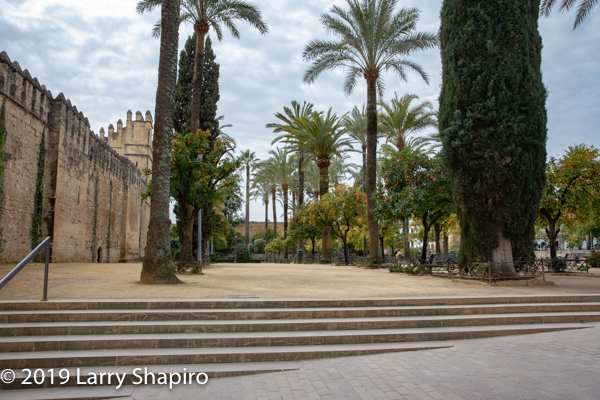 Beautiful plaza with palm trees in Cordoba