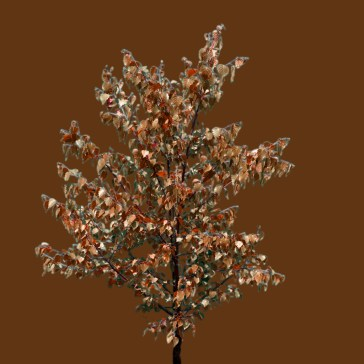branch_diffusemap_brown
