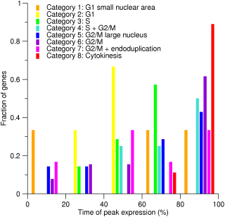 Peak time distributions for human genes with cell-cycle-related phenotypes
