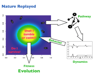 """Evolving """"chemotaxis"""" in a computer"""