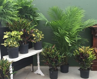 Tropical plants add harmony to an area