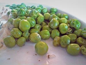 Små Gröna Jävla Ärtor