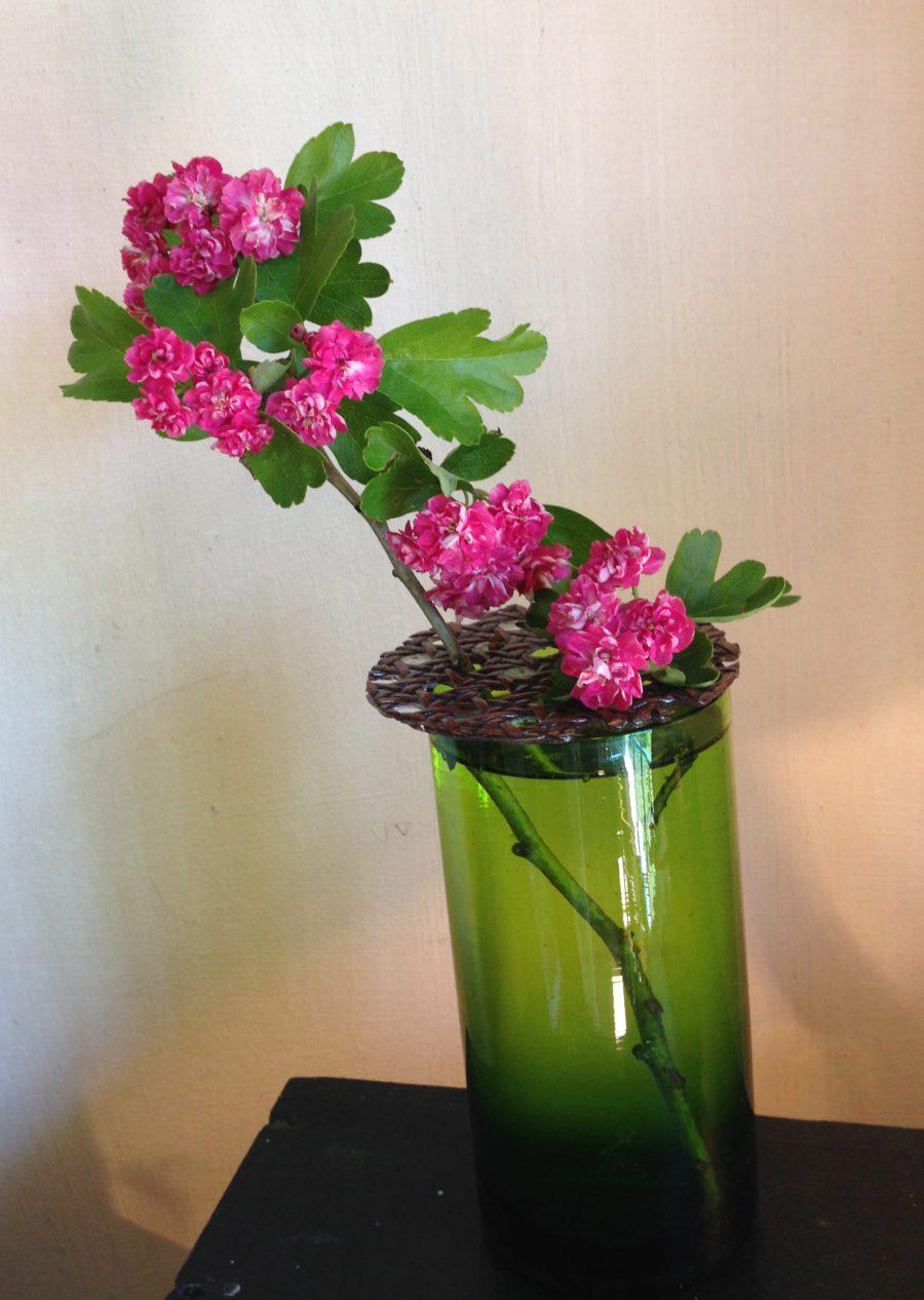 pique-fleur et cerisier