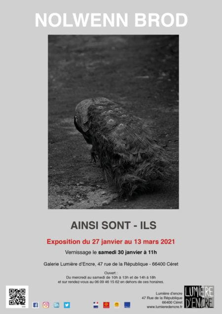 Exposition de Nolwenn Brod jusqu'au 13 mars à la Galerie Lumière d'Encre à Céret