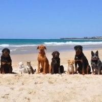 Los perros en todas las playas. Los ayuntamientos no tienen capacidad de multarte