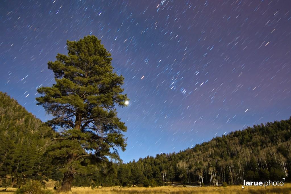 Lockett Meadow by Moonlight