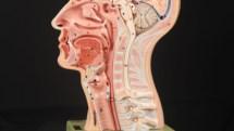 Retrograde Cricopharyngeus Dysfunction (RCP-D) - Laryngopedia
