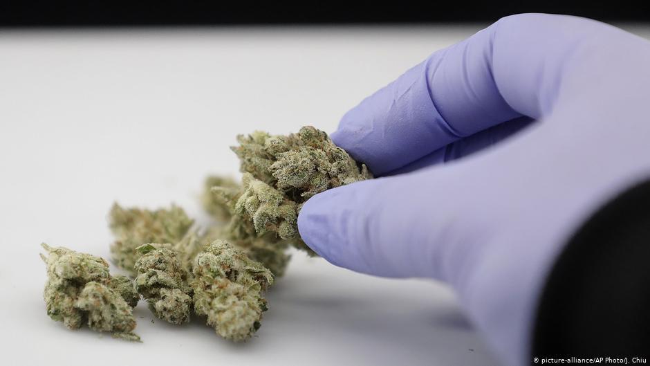 Contribución del cannabis ante la Covid-19 II: CBD, apelina y SDRA
