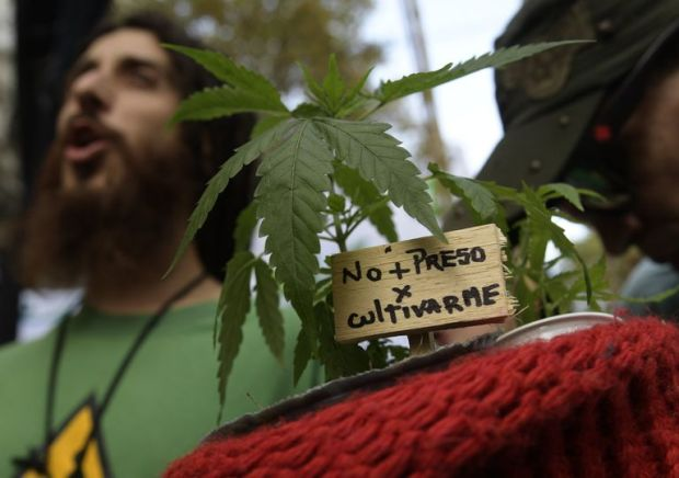 Argentina legaliza el autocultivo de cannabis para uso medicinal