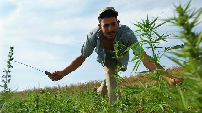 Marruecos legaliza el cannabis con fines medicinales