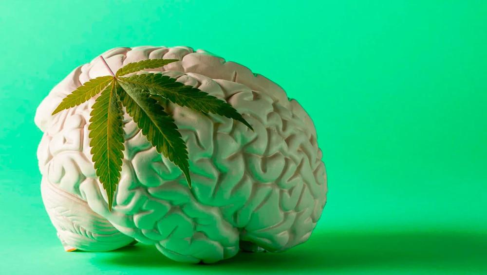 Cannabis y esquizofrenia: falsas relaciones
