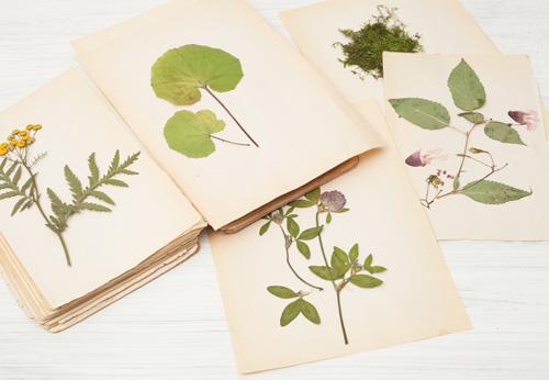 page d'un herbier