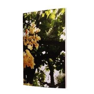 un carnet en naturalité, en herbier i sera une vrai respiration dans ta vie urbaine. viens découvrir les papiers qui le composent