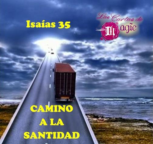 Vamos camino a la Santidad
