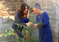 The Pomegranate tree now located in an orchard alongside Fuji apple and Clementine trees has special significance to the community.