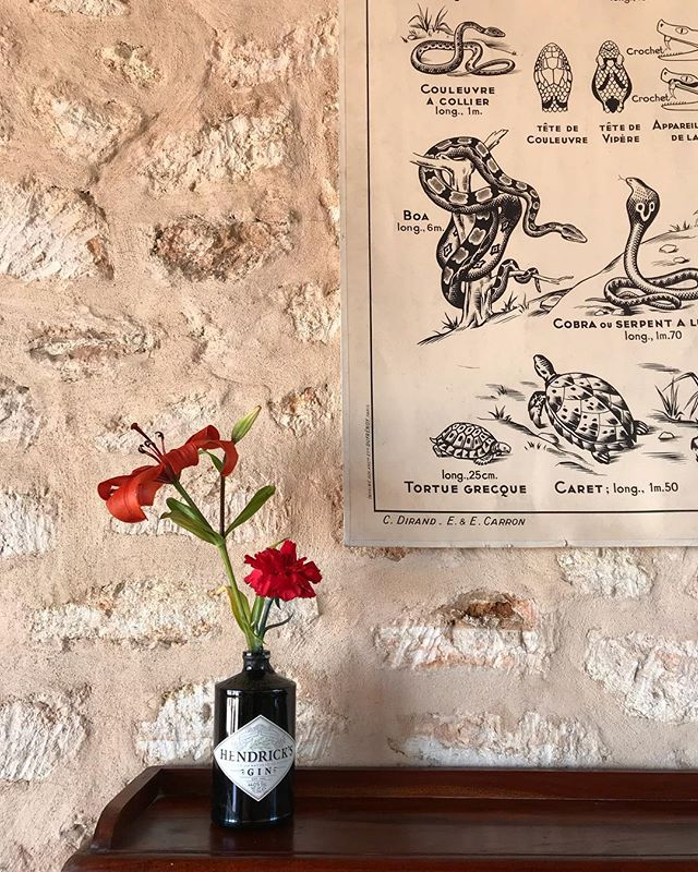 🐍🌹#vintage #poster #reptiles #freshflowers #hendricks #interiors #decoration #details #rustic #style #boutiquevilla #lascicadasibiza #ibiza