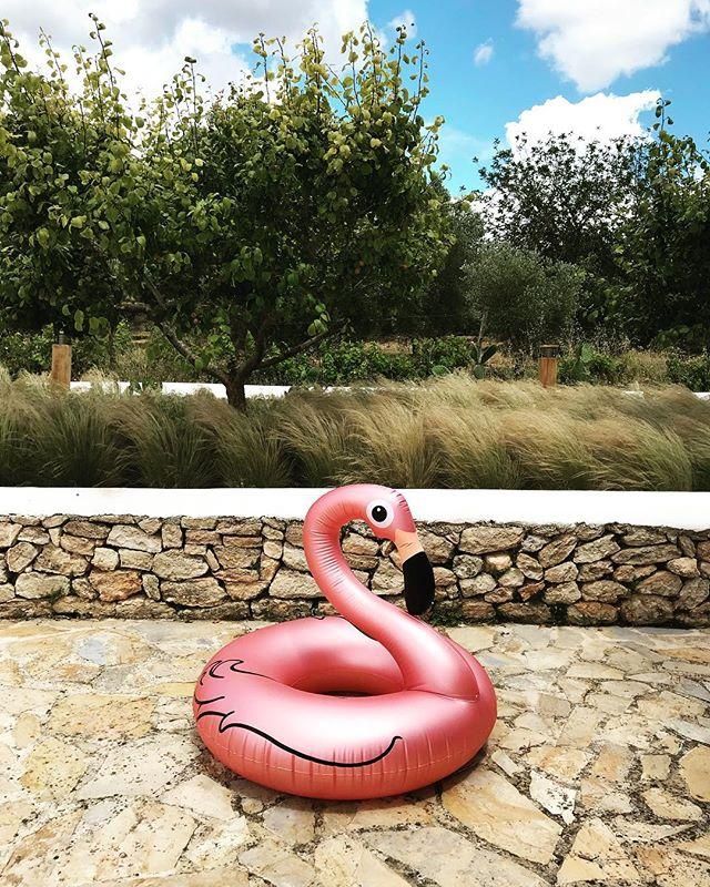 Good morning 🌞 #flamingo #morningdip #june #summer2018 #ibiza #ibiza2018 #pooltime #lush #garden #lascicadasibiza #boutiquevilla