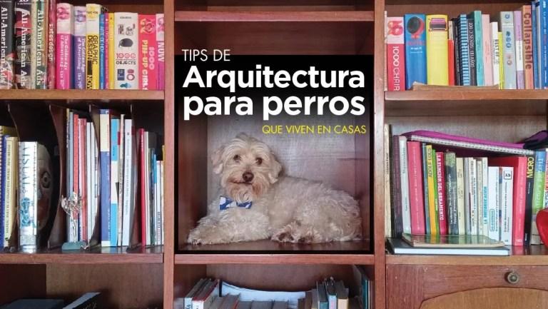 tips arquitectura perritos