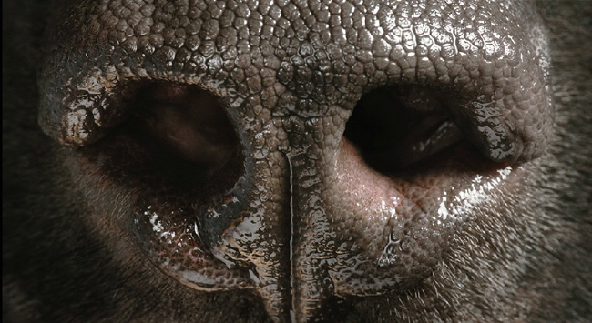 5-tim-flach-photographer1