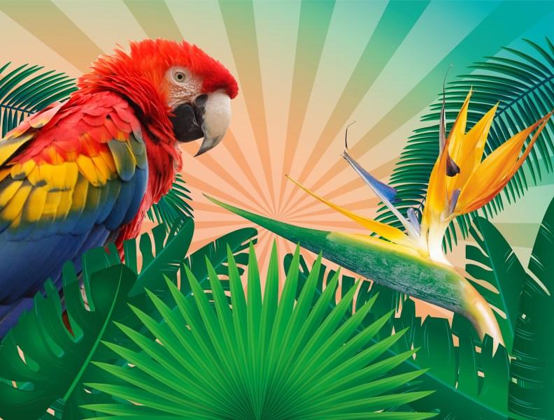 tropics-1561624_1920