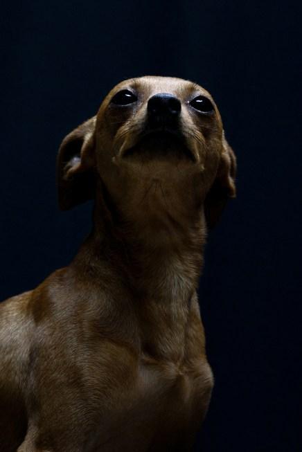 https://lascosasdelquerer.com/2016/02/24/que-perros-y-a-mucha-honra/