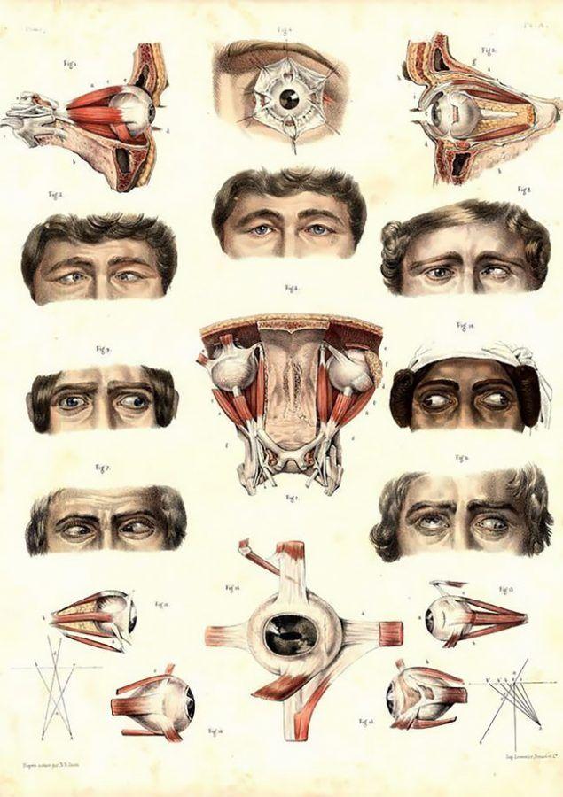 lustración dedicada al estrabismo, del 'Atlas Completo de la Anatomía Humana y la Cirugía, de Jean-Baptiste Marc Bourgery y Nicholas Henri Jacob.