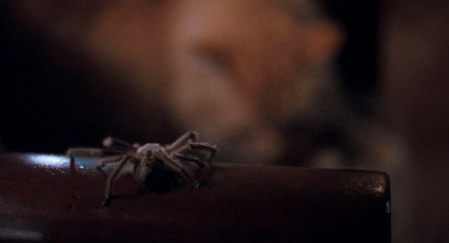 Arachnophobia Spider-little