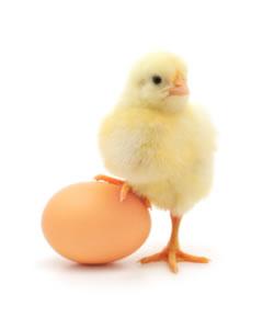Beneficios del Consumo del Huevo – Proteinas y Calorias del Huevo