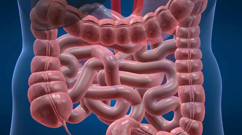 La Microbiotica Intestinal y su Importancia en la Salud