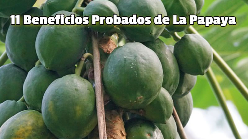 11 Beneficios Probados de La Papaya