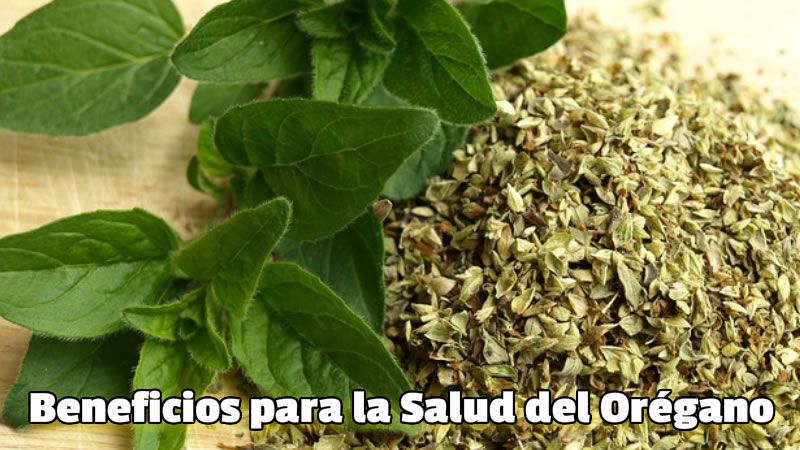 Beneficios para la Salud del Orégano