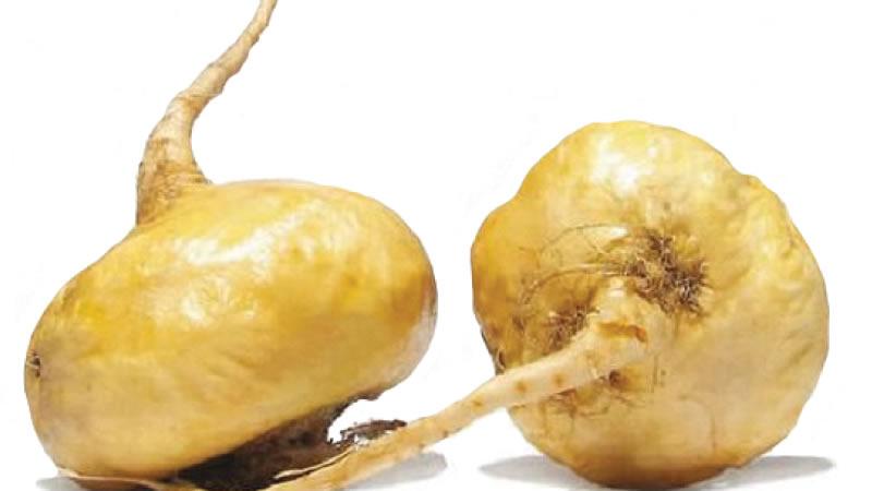 beneficos para la salud de la raiz de maca