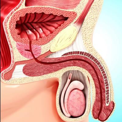 prostata sana