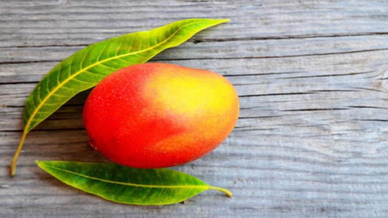 propíedades medicinales de la hoja de mango