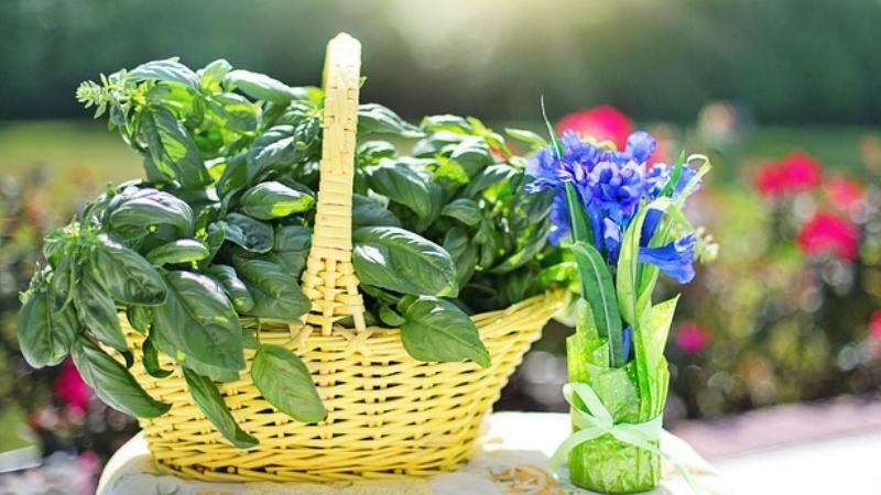 Si No Crees En La Hierbas Medicinales, Lee Estas 10 Cosas Que Cambiaran Tu Creencia