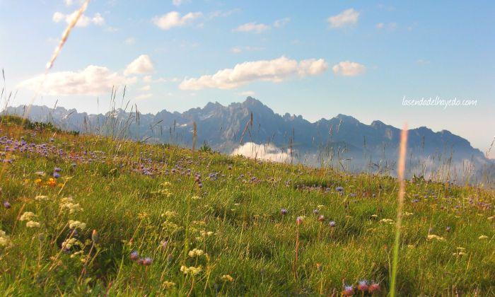 Prados de alta montaña con el fondo de los Picos de Europa