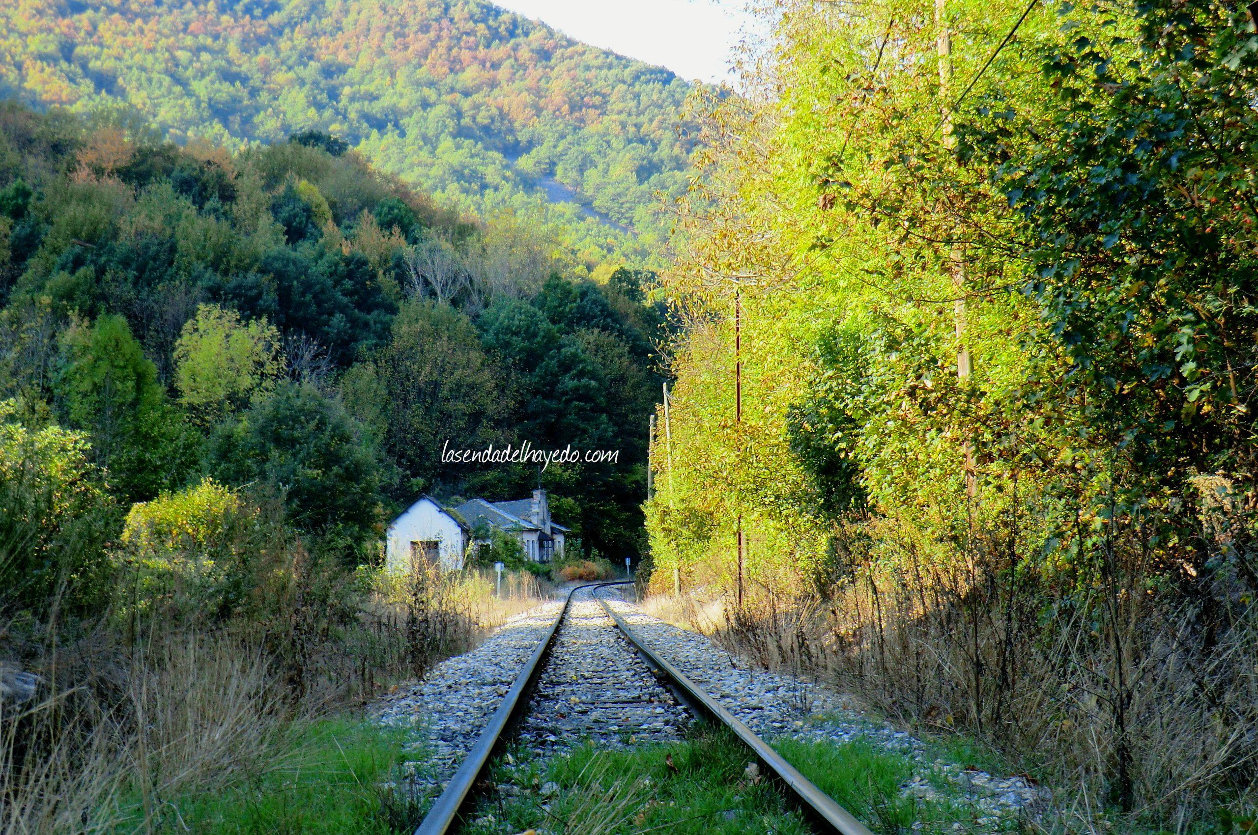 Vías del tren minero de la MSP en Cuevas del Sil