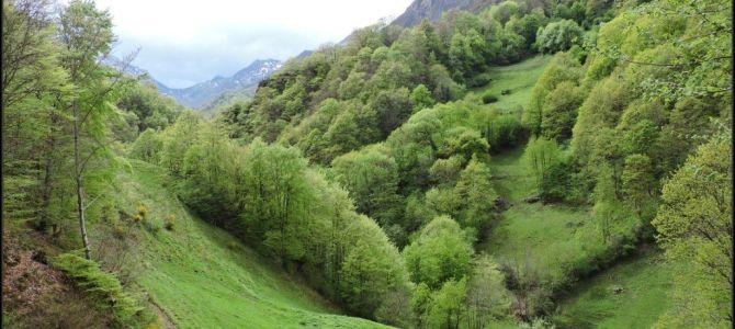 Valgrande, el gran bosque de Payares