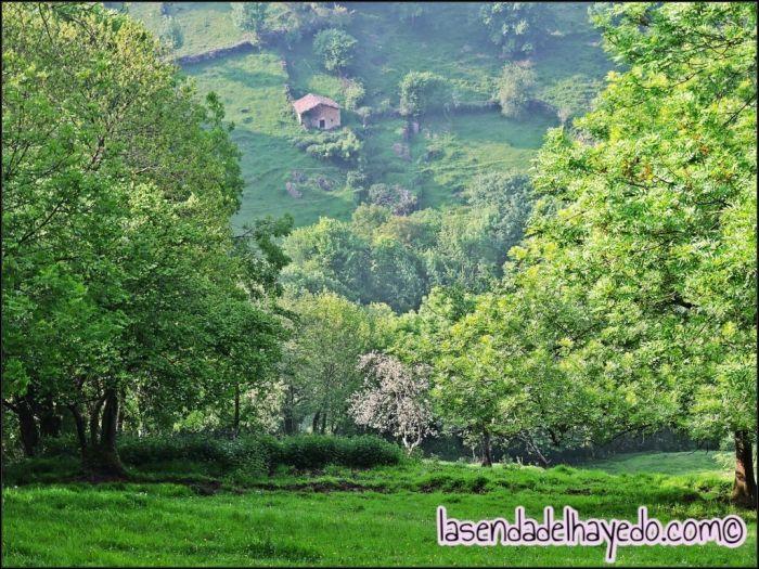 Valle de Proacina