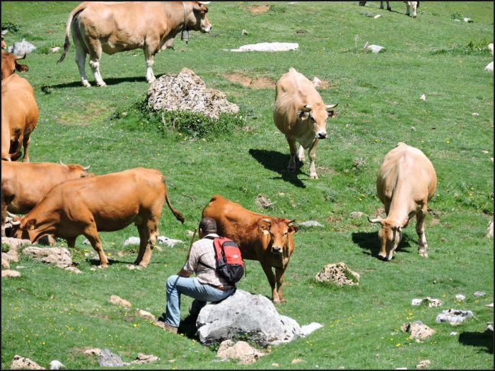 Los últimos pastores de Ubiña