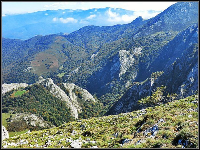 Cabeceras boscosas del valle de L.lindes. Al fondo las montañas del Cellón