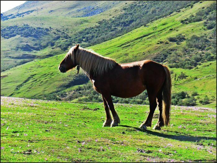 Robusto caballo en Piedraxueves
