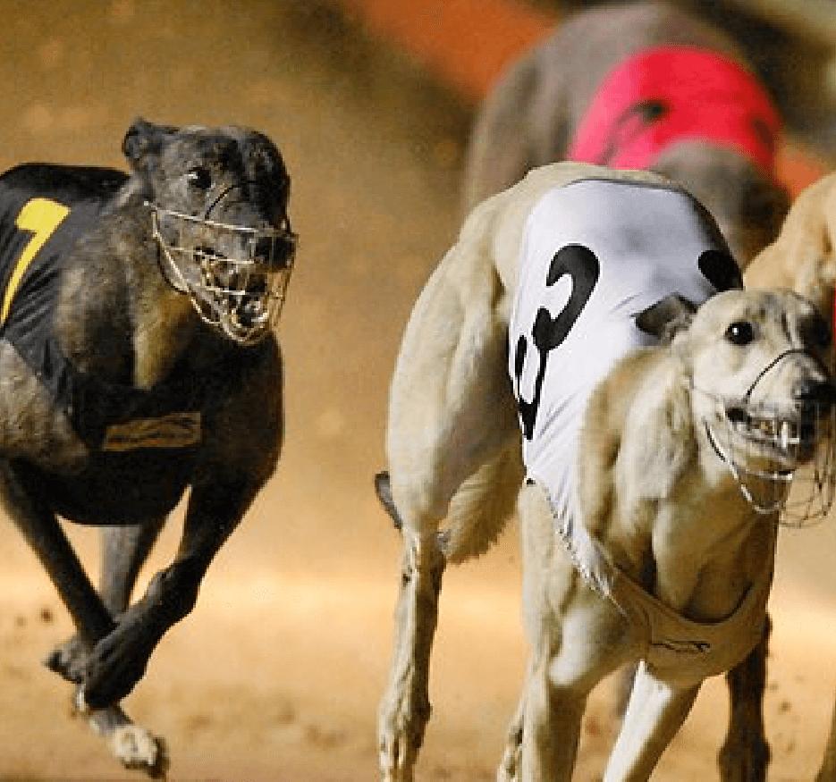 Greyhound laser