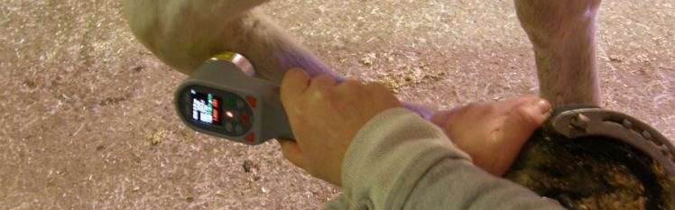 VetLaser 3000 treating injured horse