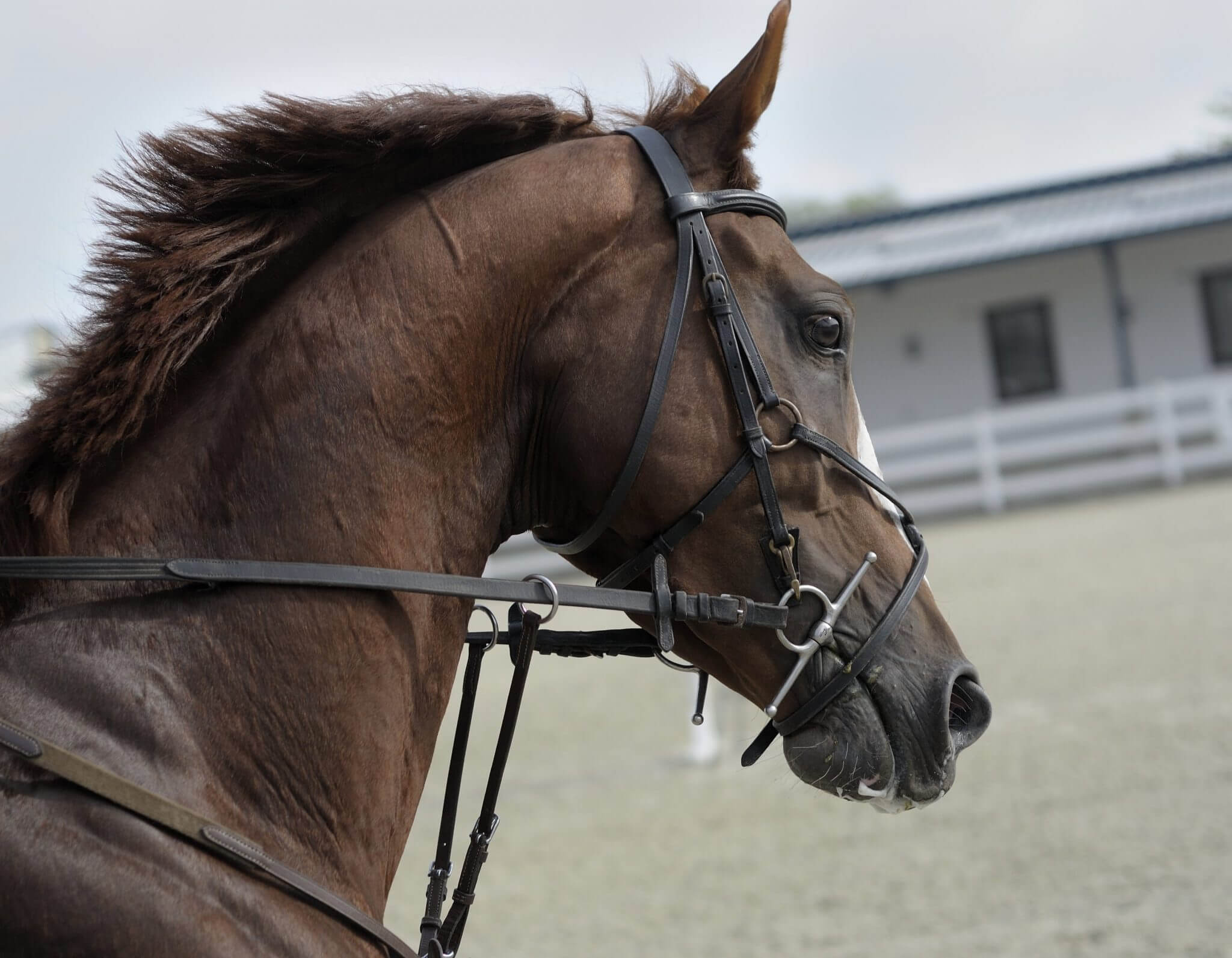 Equine Laser Therapy