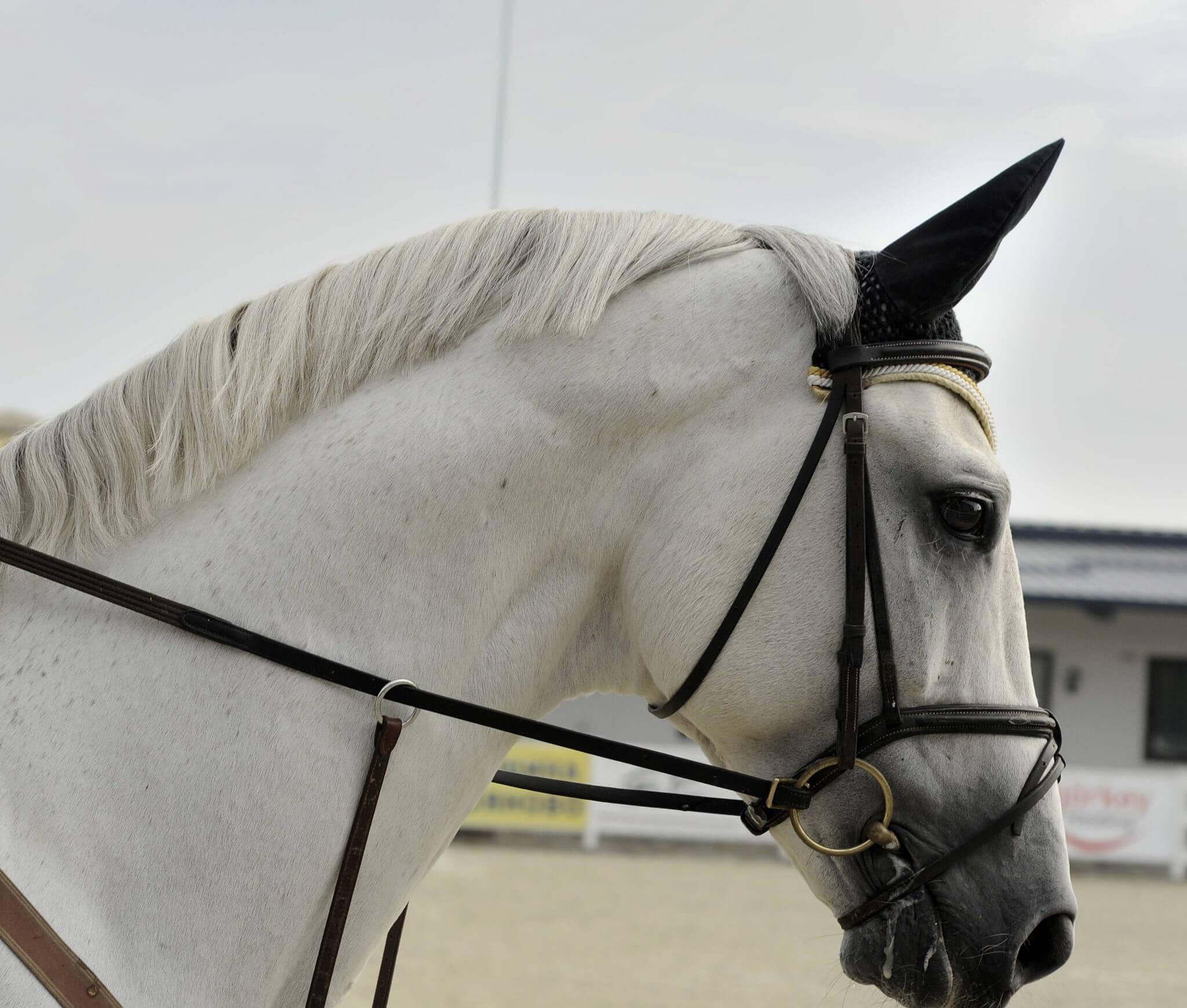 Horse Laser