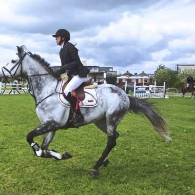 horse action dutch sports